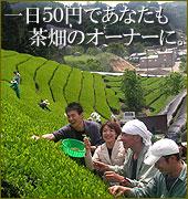 1日50円で茶畑オーナー