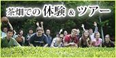 茶畑での体験&ツアー