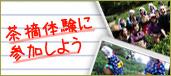 【プレスリリース】クリスマスサプライズギフトとして、「茶畑一坪オーナー権」好評