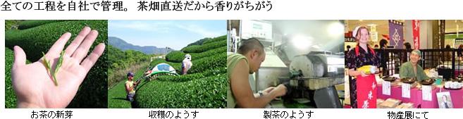 全ての工程を自社で管理。茶畑直送だから香りがちがう