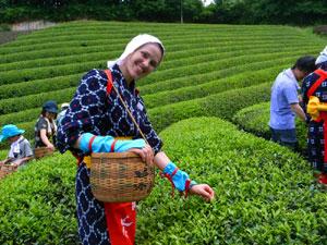 【プレスリリース】春に人気!「茶摘み体験」せまる。