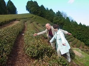 【茶畑訪問】東京から~茶畑オーナー横川さま、茶畑訪問