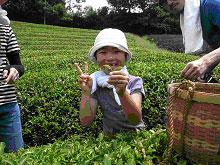 【プレスリリース】消費者・生産者一丸で、めざせ!日本一のお茶