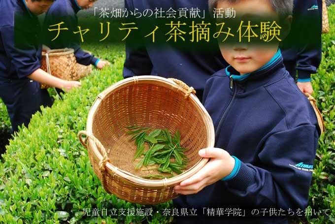 【茶畑からの社会貢献】児童自立支援施設・奈良県立「精華学院」チャリティ茶摘体験