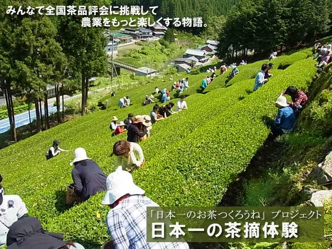 【報告】日本一の茶摘み体験~過去最高117名で目指せ日本一のお茶