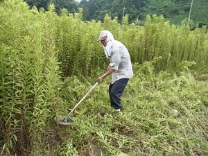 【8月2~3週目の農作業】草引きと草刈り!