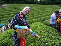 【プレスリリース】茶畑も収穫の秋!『秋の茶摘み体験』開催