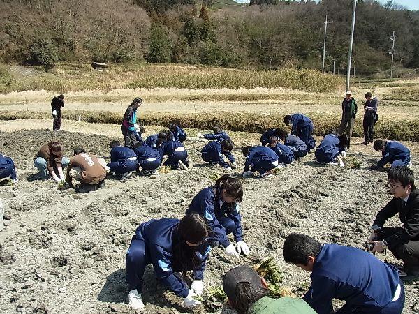【地域】中学生の茶苗の植林体験2012