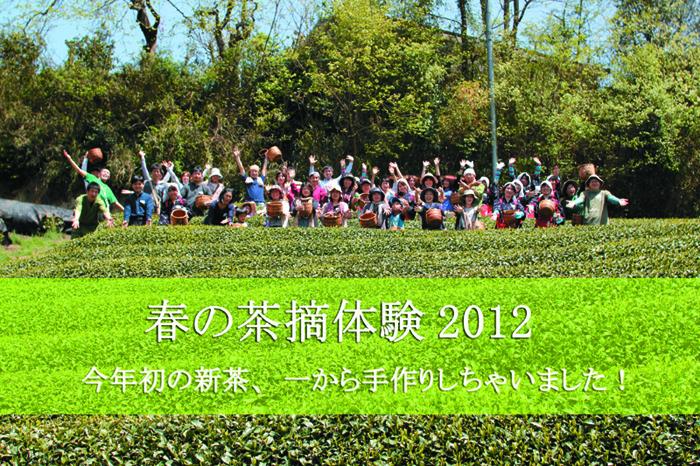 【イベント報告】春の茶摘体験2012