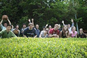 【日本茶を世界へ】アメリカ・ミシガン大学から茶摘体験