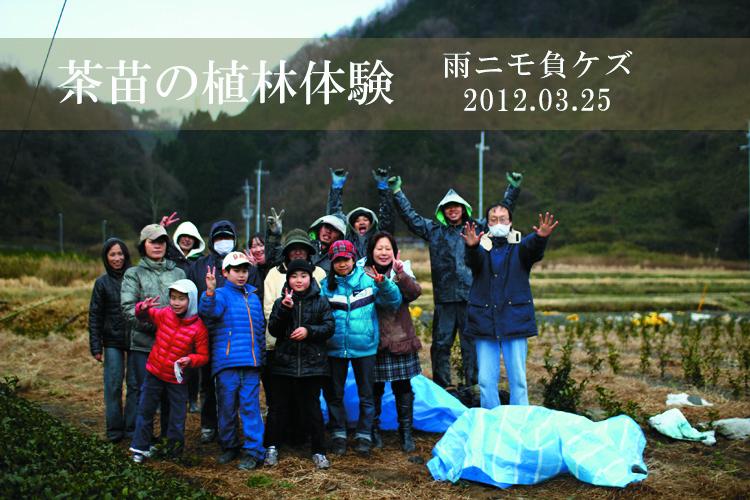 【イベント報告】茶苗の植林体験